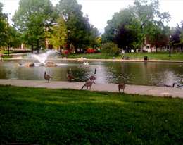 Goose Management Services Upper Arlington OH